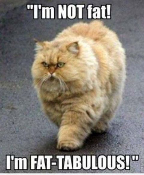 Funny Cat Wallpapers