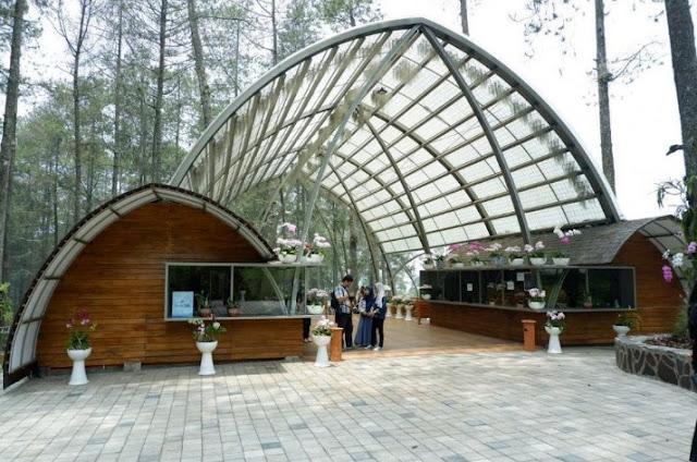 Tempat Wisata Hutan Pinus Orchid Forest Lembang Bandung