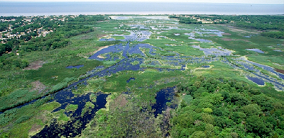 Up to four-fifths of wetlands worldwide could be at risk from sea level rise