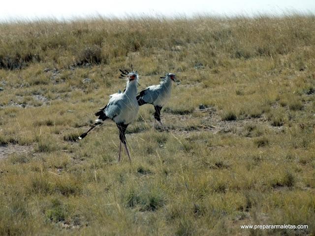 safari por namibia