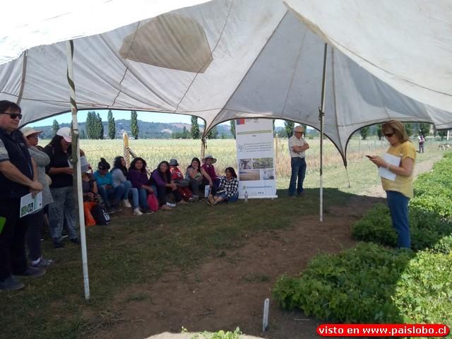 Poroto manteca: proyecto permite avanzar hacia nueva variedad mejorada