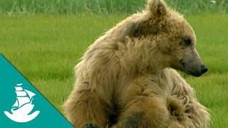 Documental La tierra de los osos gigantes