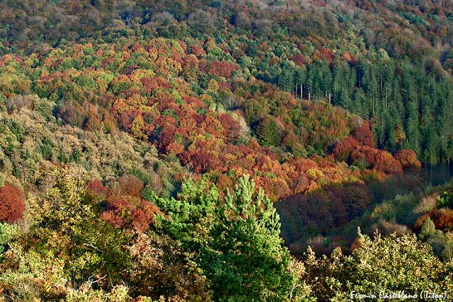 Bosque con colores de otoño