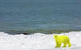 Gilets jaunes : la BBC à la recherche d'une piste russe dans - ECLAIRAGE - REFLEXION ours