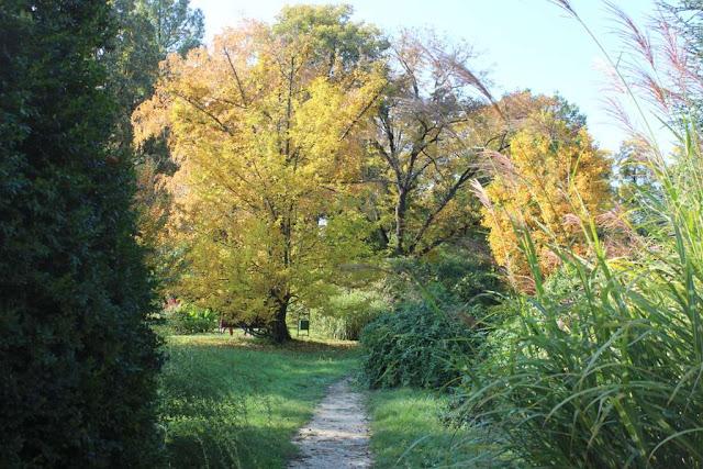 gradina toamna pomi mari miscanthus frunze galbene idei plante gradina