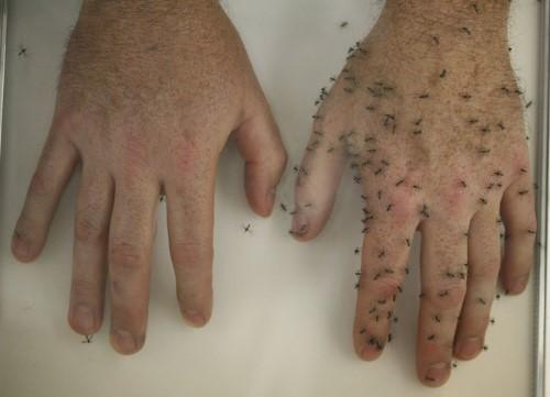 6 Cara Alami Jauh dari Gangguan Nyamuk