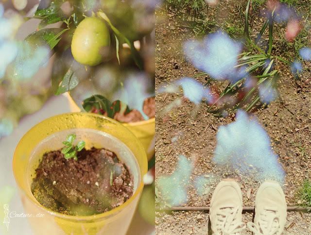 fotografia analogowa, wiosna