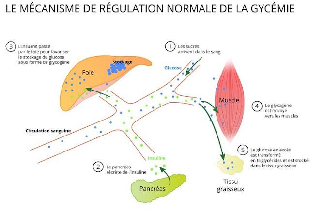 Mécanisme de la glycémie