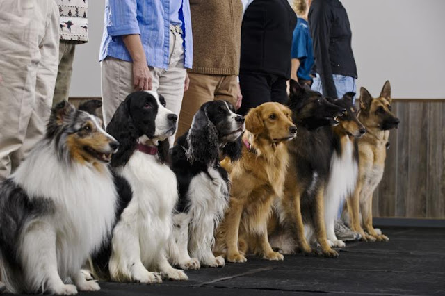 Dog-obedience-training-class