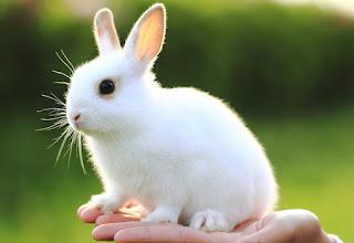 Kunići su male, pitome i nežne životinje Panvet Subotica