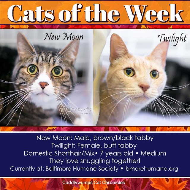 Cats of the Week: New Moon & Twilight #seniorcats #catadoption #BaltimoreHumaneSociety