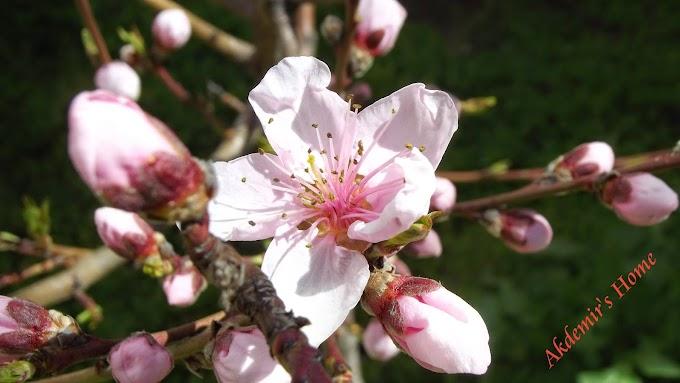 Bahar gelmiş hoşgelmiş.....