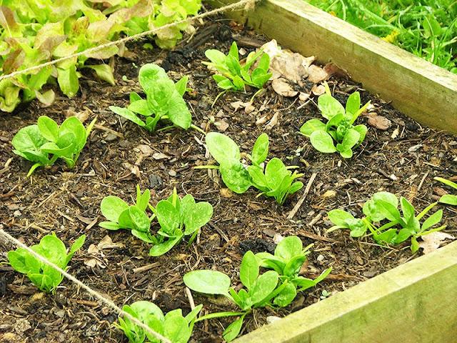 jardiner facile avec le potager en carrés