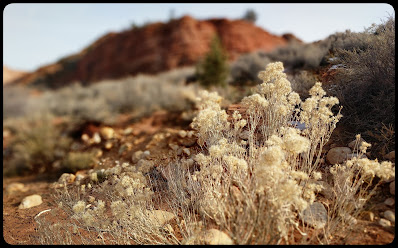 Beautiful White Flower Seed on Wire Pass Trail