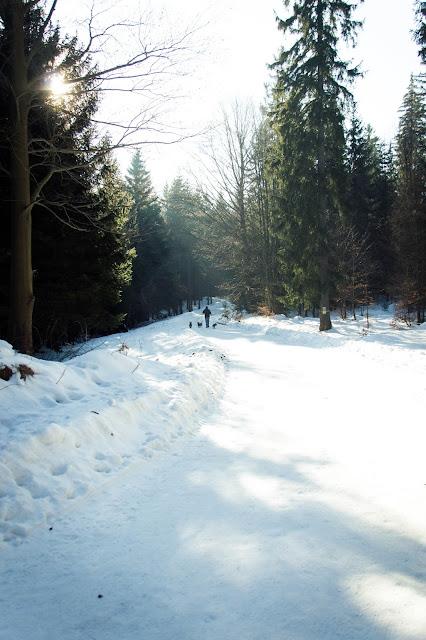 góry z psem, Karkonosze z psem, podróże z psem, zima w górach