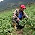Ecuador aprueba Proyecto de Ley para evitar la especulación de Tierras