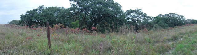 five ridge state prairie features prairie grasses and wooded areas