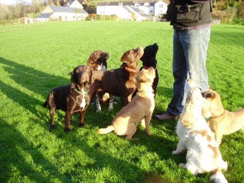 0fa18c0d7184 ΕΚΠΑΙΔΕΥΣΗ ΣΚΥΛΩΝ  Τιμές για εκπαίδευση σκύλων - πως να επιλέξουμε ...