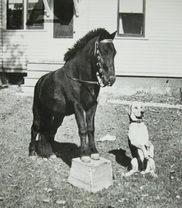 1000+ images about Dog and Pony Show on Pinterest | Ponies ...