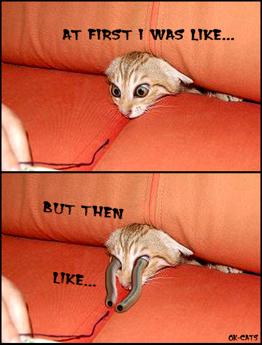 Photoshopped Cat picture • Funny telescopic  Eyes • At first I was like... but then like...