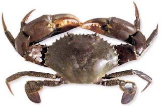 Cara Menghilangkan Racun Dalam Daging Kepiting