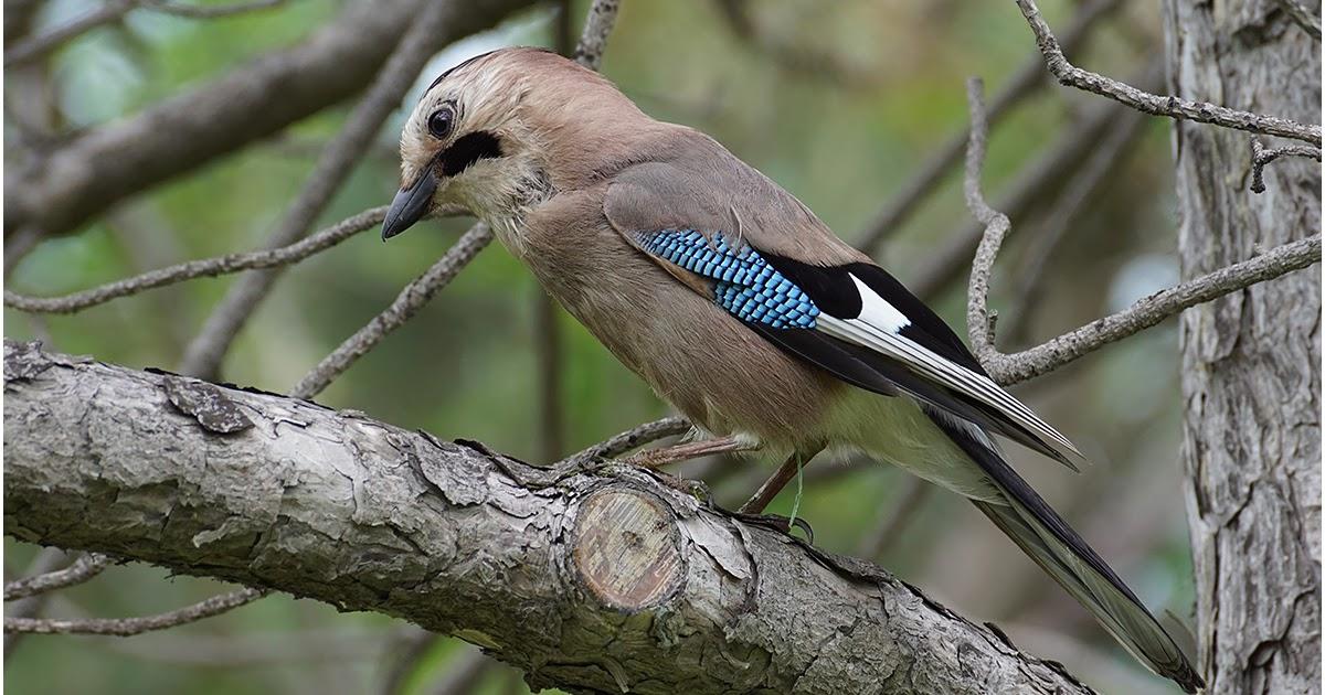 неё птицы краснодарского края фото и описание ходовой материал