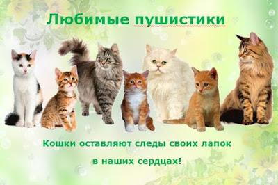 блог кота васьки