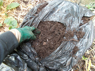 Leaf mould ready to use How to make leaf mould The Green Fingered Blog