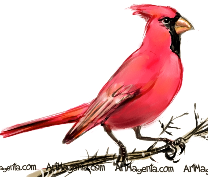Cardinal Bird Art Print | iCanvas  |Cardinal Bird Drawings