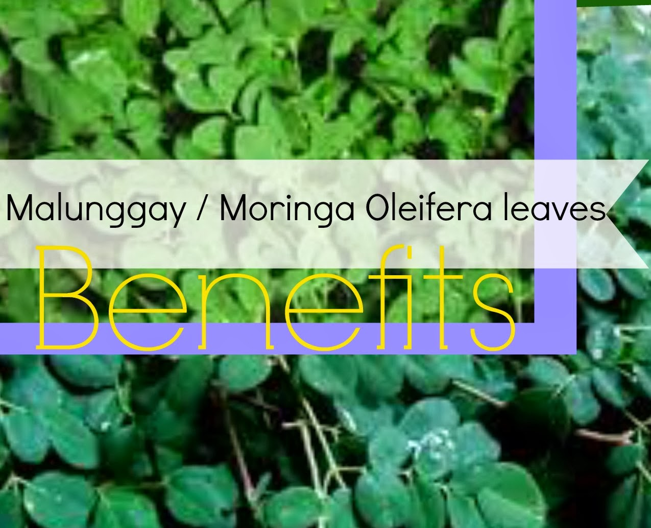 The Feasibility of Malunggay leaves and Chili fruit as Pesticide Essay Sample