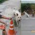 แชร์สนั่น!! หมานั่งเฝ้าระวังภัยให้เจ้าของที่ เมาแล้วหลับ สุดท้ายต้องถูกส่งตัวไปโรงพยาบาลด่วน !? (ชมคลิป)