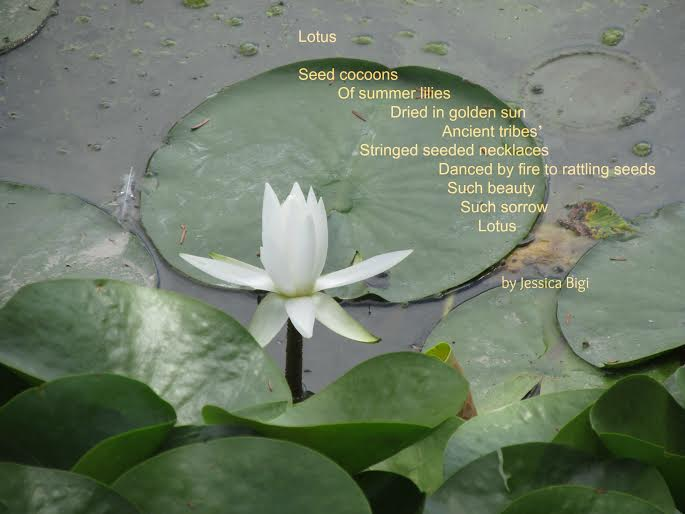 Todays little ditty dmc lotus by jessica bigi amy ludwig vanderwater has challenged us to write poems about small things animals or objects you see everyday and dont give much thought mightylinksfo