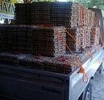 harga telur puyuh hari ini