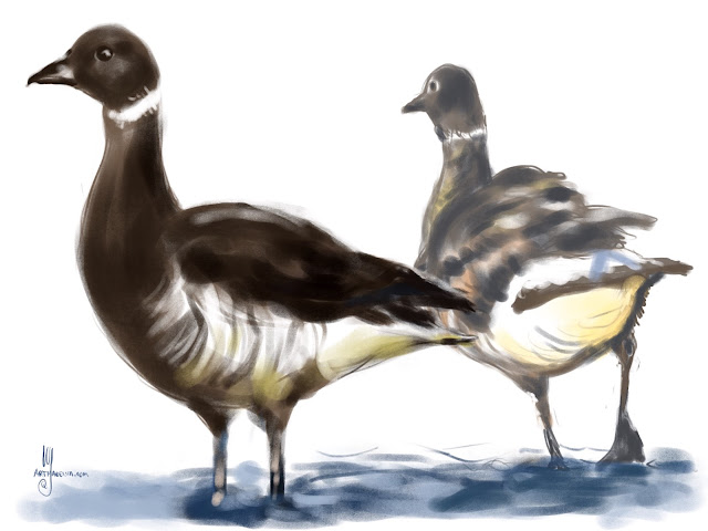 Brant Goose bird painting by Artmagenta