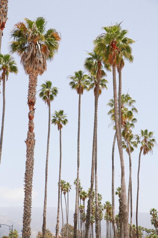 Santa Barbara Babymoon