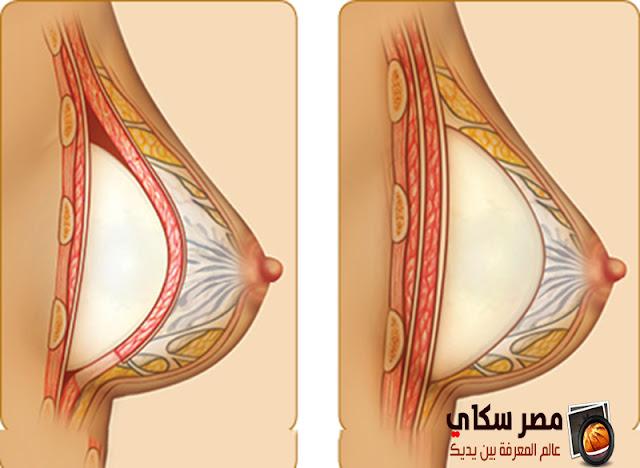 وظيفة الثدى وتركيبه ومم يتكون breast