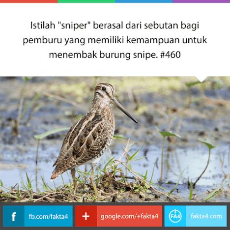 Awal Mula Sniper: Burung Snipe