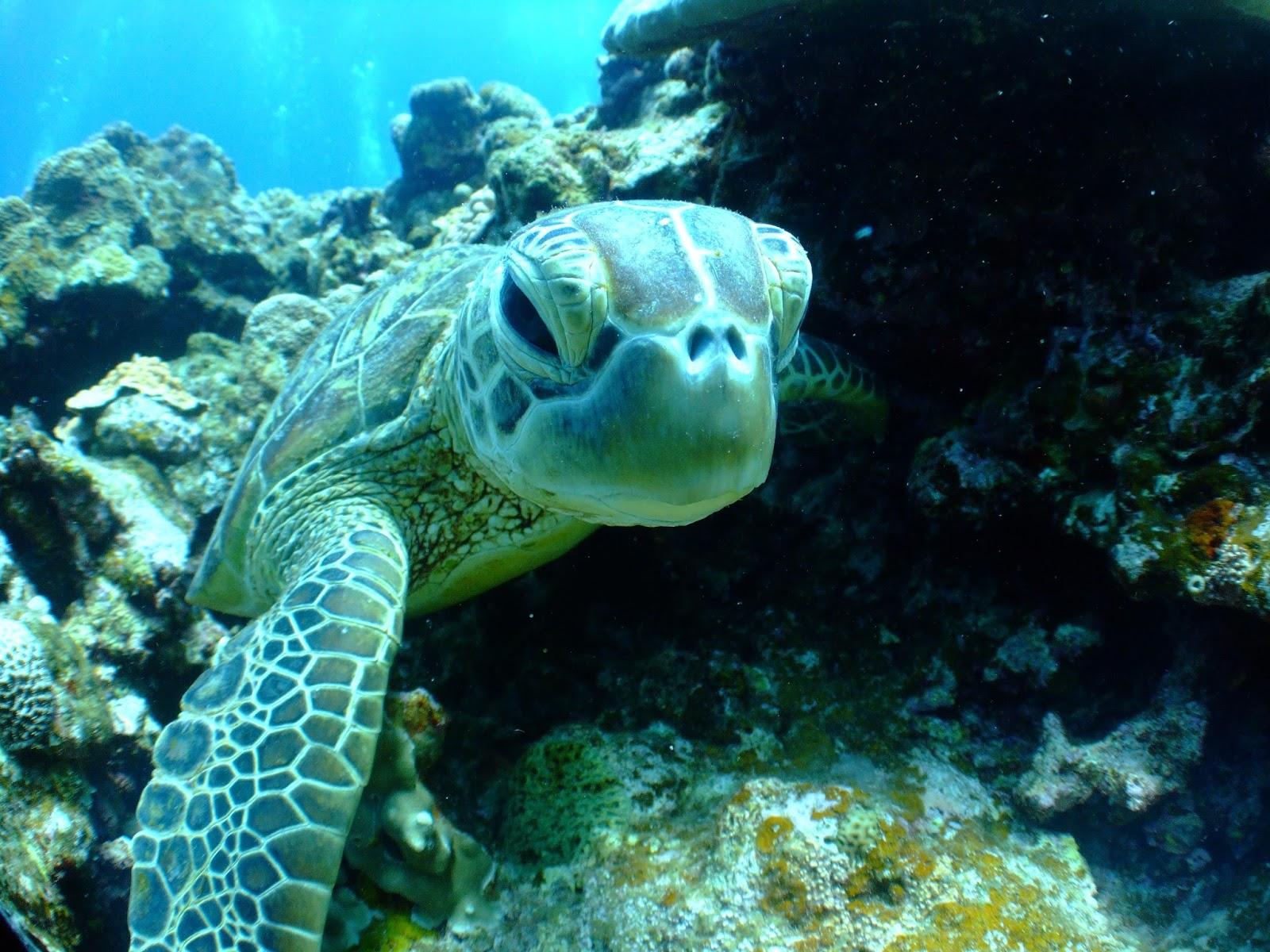 沖繩-潛水-浮潛-大度海岸-推薦-Okinawa-scuba-diving-snorkeling