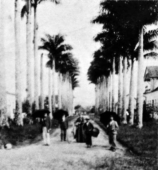 Rua das Palmeiras, em Joinville