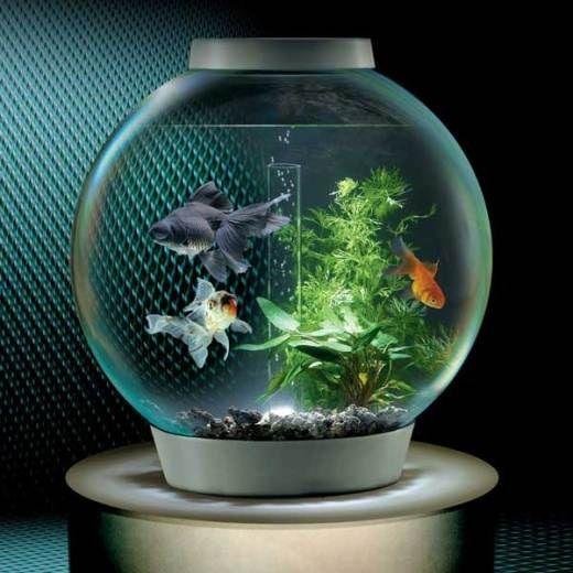 harga aquarium bulat besar