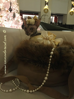 Coco Cornish Rex Couture Holiday NYC