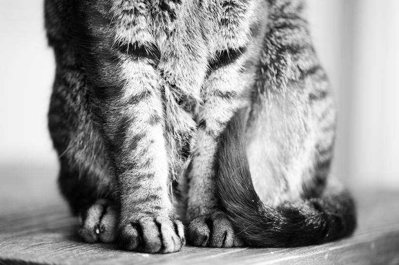 sochi paws
