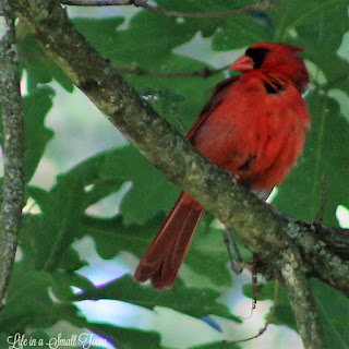 Cardinal perched on a branch of a tree