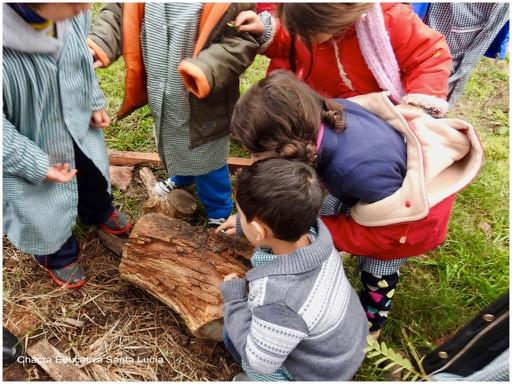 Niños observando un tronco lleno de insectos y pequeños organismos - Chacra Educativa Santa Lucía