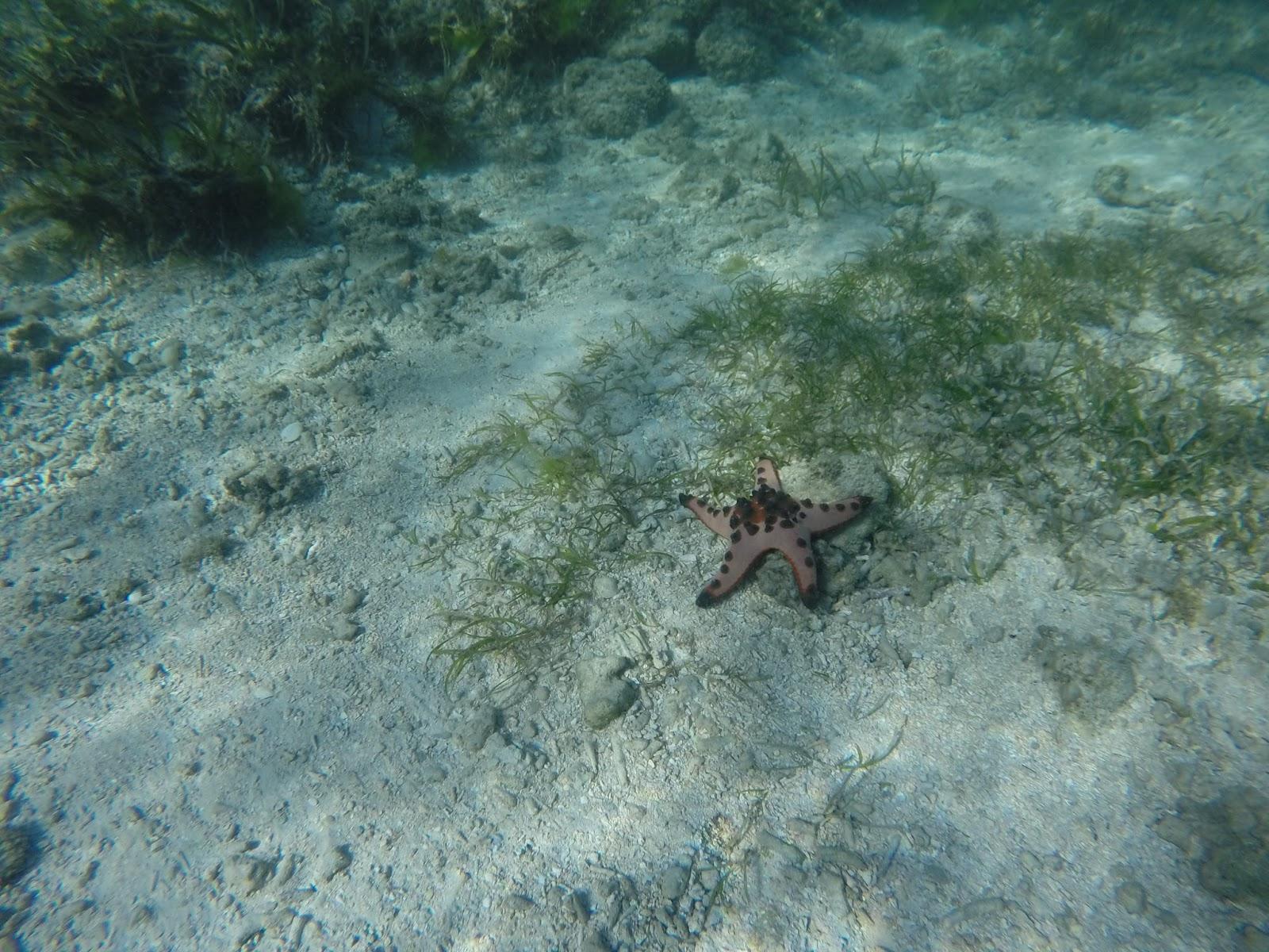 Siquijor Kiwi Dive Resort snorkelling