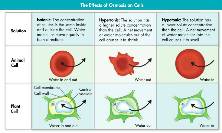 Sulli U0026 39 S Biology  Ch 7 Cell Structure And Function