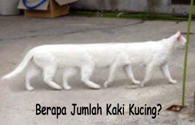 foto lucu kucing