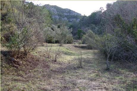 Zona de reintroducción donde se ha realizado gestión del hábitat