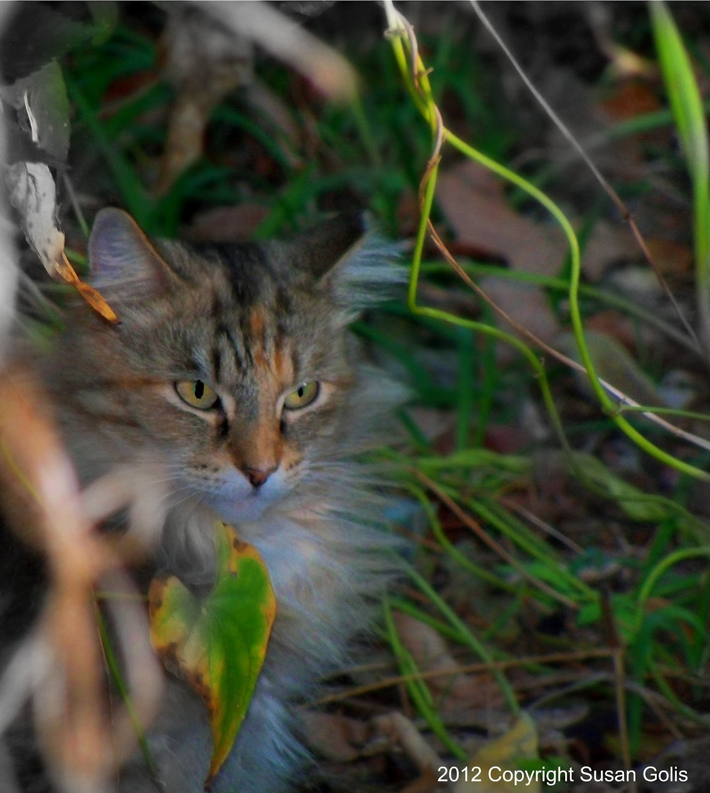 Feral cat hiding in brush