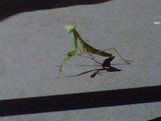 Even Miracles Take A Little Time Praying Mantis